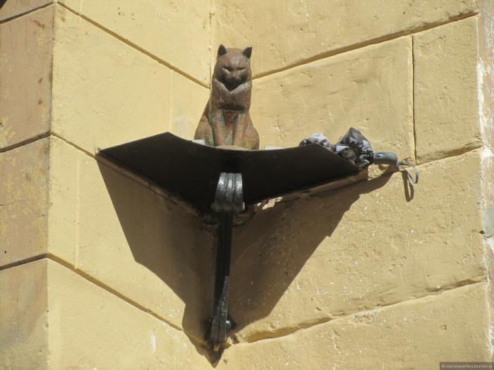 Кто-то подарил коту зонтик, чтобы он не мок под дождём. / Фото: www.tourister.ru